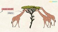 Teorii ale evolutiei